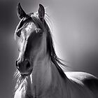  My neighbors Mare  by pdsfotoart