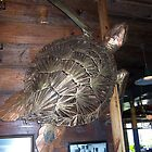 Metal Art - Turtle in Fisherman's Whorf in Galveston Texas by aweddingtheme