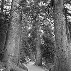 Rocky Mountain Forest Nature Path BW by Bo Insogna