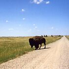 Buffalo Up Close in South Dakota by aweddingtheme