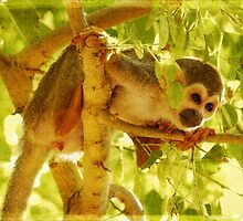 Squirrel Monkey No. 2 by photecstasy
