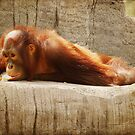 Orangutan No. 2 by photecstasy