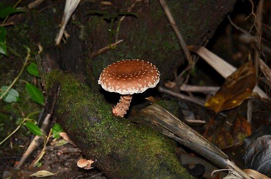 mushroom by Margaret  Shark