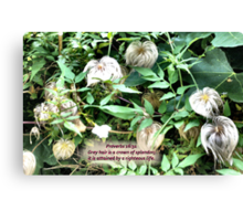 SILVER HEADS  a garden with a message for the elders! Canvas Print