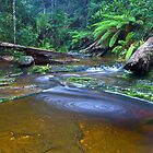 Snug River-Tasmania by Phillip Hirst