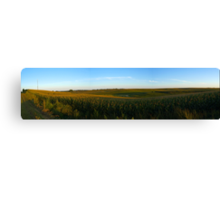 Summer Corn Field Canvas Print