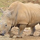Rhino by dtfrancis15