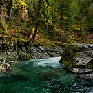 Green Enough by Charles & Patricia   Harkins ~ Picture Oregon