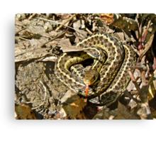 Juvenile Eastern Garter Snake - Thamnophis sirtalis Canvas Print