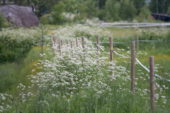 Fence and Flowers by Mikael Andersson