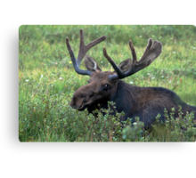 Resting in the willows Canvas Print