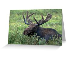 Resting in the willows Greeting Card
