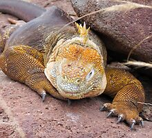 Land iguana 9. by Anne Scantlebury
