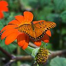 Butterfly at McBryde by JagiShahani