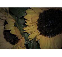 Softer Sunflower Photographic Print