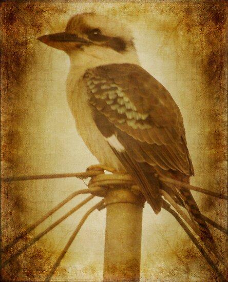 My Kookaburra Friend by Clare Colins
