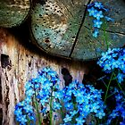 forget me not by Richard George