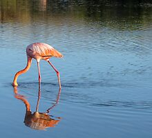 Flamingo 2. by Anne Scantlebury