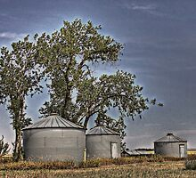 Silo Siblings by Debbie Roelle