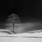 December 2013 by StefaniaC