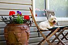 A dogs life is hard work by Ian Berry