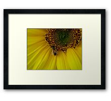 I Will Bee Your Shelter Framed Print