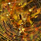 Grandmother Spider by Robin Simmons