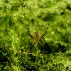 Arachne, the Garden Spider by Robin Simmons