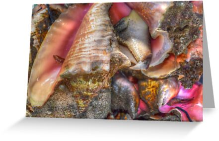 Conchs at the Fish Market in Montagu Beach, Nassau, The Bahamas by Jeremy Lavender Photography