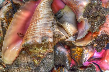 Conchs at the Fish Market in Montagu Beach, Nassau, The Bahamas by 242Digital