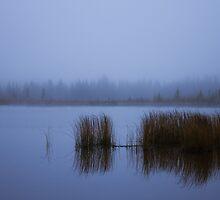 Vermilion's Fog by Pam Hogg