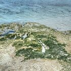 Sea Moss in Western Nassau, The Bahamas by 242Digital