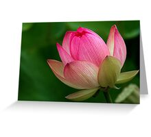 The Lotus Flower Greeting Card