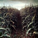 The Corn Field ii by Citizen