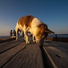 sniffdog by badnoire