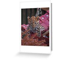 Amur Leopard Cub in Hammock Greeting Card