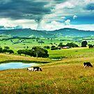 Gerroa Hinterland by Les Boucher