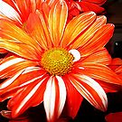 Autumn Colors by Darlene Bayne