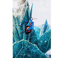 Cotton Harlequin Bug Photographic Print