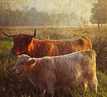 Highlanders. Scottish Countryside by JennyRainbow