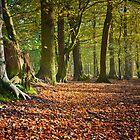autumn splendour by paul mcgreevy