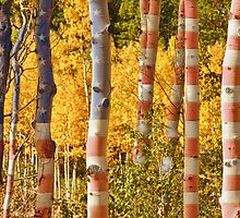 Aspen Gold Red White and Blue by Bo Insogna