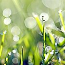 Early morning dew drops on grass... my version of it... ? by Gregoria  Gregoriou Crowe