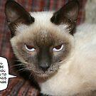 Purr-fect cats by garigots