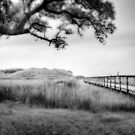 Dream Sequence in B&W by David Edwards