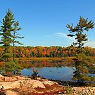 Cranberry Bog Trail Killarney Provincial Park by Debbie Oppermann