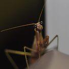 Alien Visitor by Wviolet28