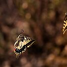 Dancing Butterflies by César Torres