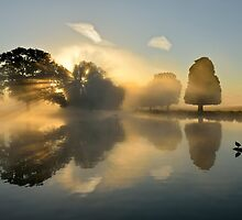 Heron Pond at Sunrise by Kasia Nowak