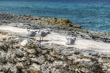 Seagulls in Paradise Island, The Bahamas by 242Digital